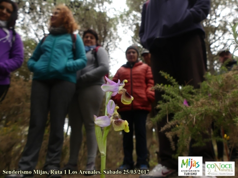 2017-03-25, R1 Senderismo Mijas, Arenales (18)