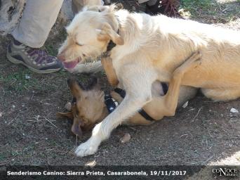 2017-11-19, ConoceNatura Canino, Sierra Prieta (103)