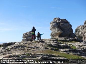 2018-01-20, ConoceNatura Flora & Fauna, Cabras del Torcal (65)